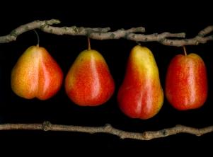 Pears/Kazimierski