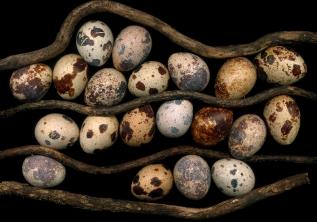 Eggs/Kazimierski